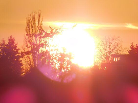 Bäume lassen die welken Blätter einer dunklen Vergangenheit zurück, wie einen schweren Traum beim Aufwachen. Nun ist es Zeit für die Sonne, für das Neue Licht und Ihre Musik. Bäume werden transparent. Der Wald und alle Bäume sind jetzt eine Einheit: das Universum, die Weisheit, die Ewigkeit, so groß wie ihr von Sonne erfülltes Herz.