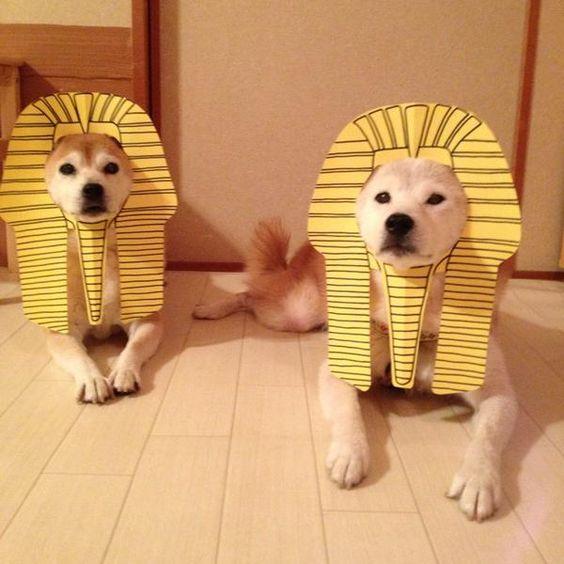 …家の中にスフィンクスがおる(滝汗)。しかもダブルで(笑) pic.twitter.com/oucGZoFak0— C_Suzuki (@C_S0325) 2015, 8月 21