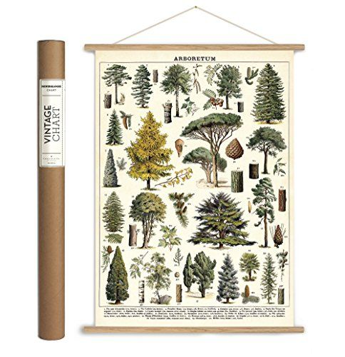 Cavallini Papers Co Vintage Arboretum Hanging Poster K Https Www Amazon Com Dp 1635444322 Ref Hanging Posters Unique Wrapping Paper Vintage Wall Decor