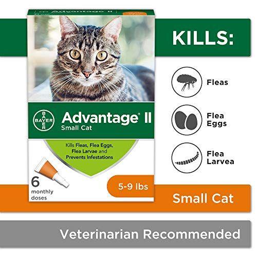 Flea Prevention For Cats 5 9 Lb 6 Doses Benefit Ii Flea