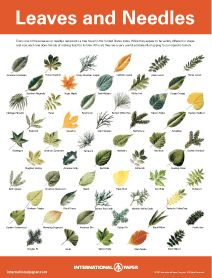Five downloadable posters about trees: Can You Tell Which leaves & Needles Go To Which Tree?