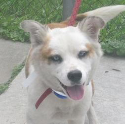 FOUND IN CANTON, OHIO>>>69 Souix is an adoptable Husky Dog in Canton, OH. Releasedate 8/12, $ 86.00 fee includes license, 5 way shot if able and available. $50.00 goes to the cost of spay/neuter and rabies. We take cash on...