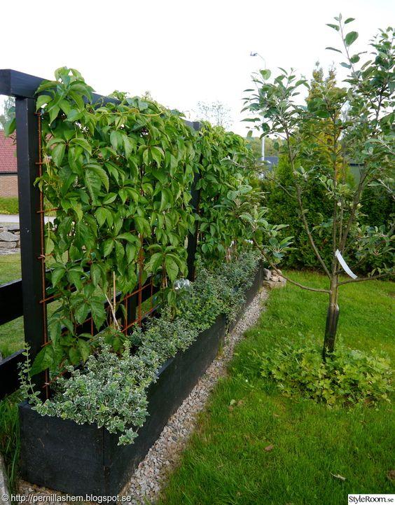 Gör blomlÃ¥da med spalje - Ett inredningsalbum pÃ¥ StyleRoom av ... : trädgård spalje : Trädgård