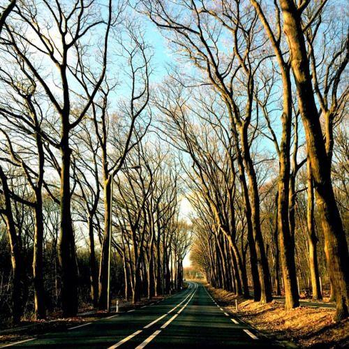 Winter #noleaves #geenblaadjes #bomen #tree #road #weg #morningsun #ochtendzon #Gelderland #TheNetherlands #Nederland #Holland #photographer #fotograaf #LynnVesnice @LynnVesnice
