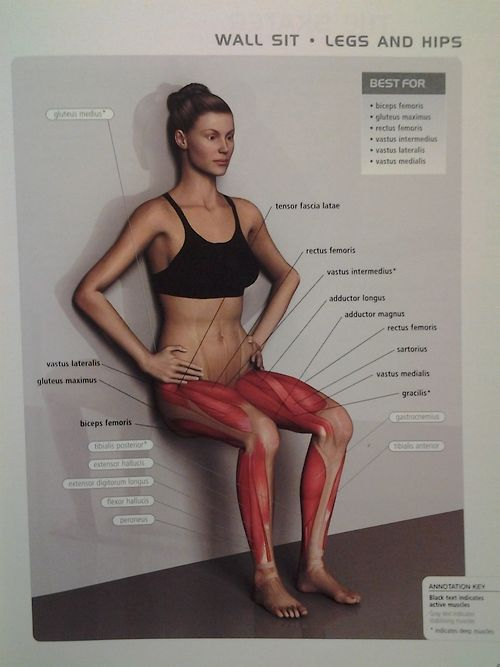 muscle diagram - LEGS/HIPS: wall sit  (ant & post thigh muscles, gluteus maximus):
