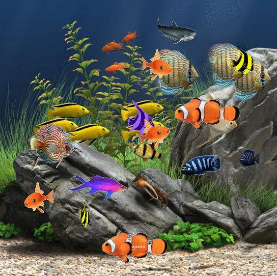 fond d 233 cran gratuit aquarium fond ecran aquarium gif fond d 233 cran projets 224 essayer