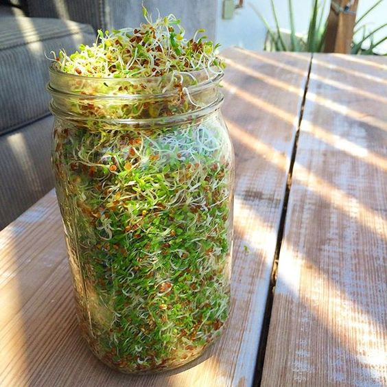 Mason jar sprouts!!! This was 1 tablespoon alfalfa seeds... Took three days. Now I'll have green little babies in my salad all week! Sharing the tips and tricks in my next newsletter. www.rachelbrathen.com to sign up! #sprouts #sprouting #masonjar #diy #love