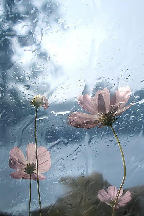 Rain by Levdokya