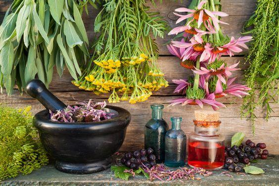 wiccan gyógynövények a fogyáshoz hibiszkusz tea zsírégetés