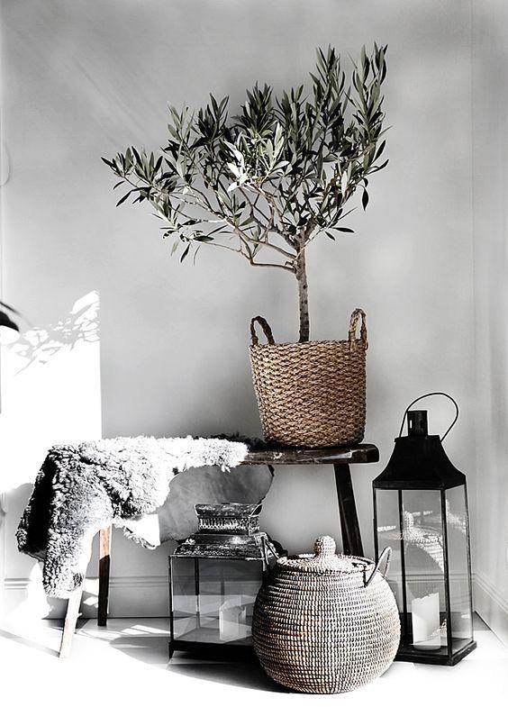 Tendance #déco : exit les pots ! plantes & arbustes trouvent leur place dans de jolis #paniers tressés http://bit.ly/2azDMBJ: