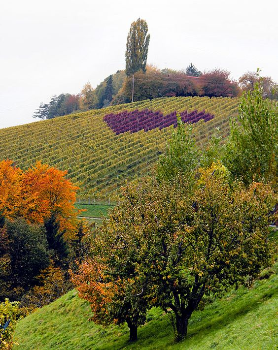 photo by Caroline.... taken in the southernmost part of Austria..... the wine producer deliberately planted his vineyard so that the natural colors would form a heart in autumn!