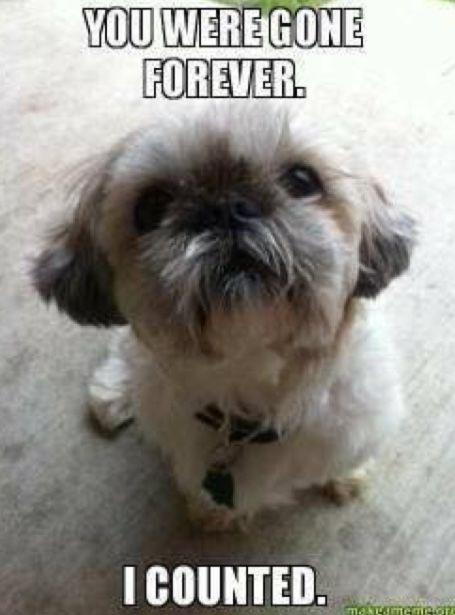 Follow Slayinqueens For More Poppin Pins Shih Tzu Puppy Shih Tzu Cute Animals