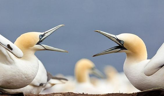 Photo of the Day: Squabbling Seabirds | Smithsonian