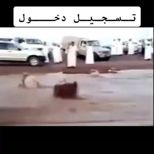 16 Likes 2 Comments المسافرة Almesafrah On Instagram الشعب من بكره ي عزتي لهم رجال الدفاع المدني Instagram Vehicles