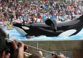 BLACKFISH looks at the tragedy of animals in captivity