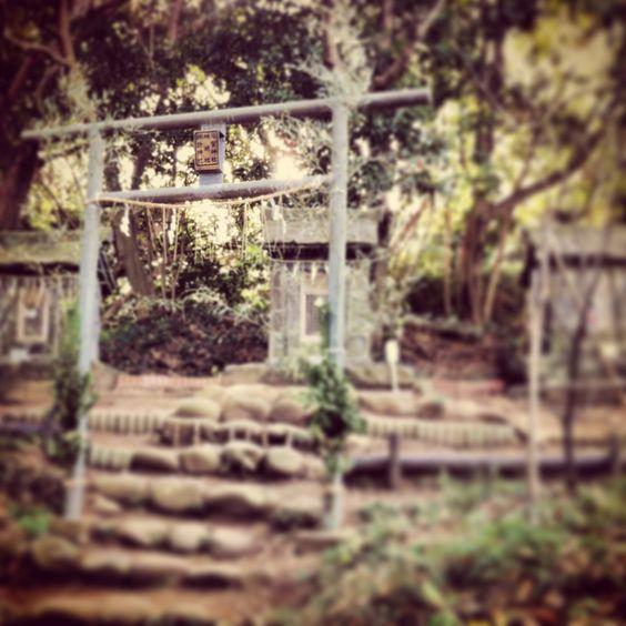 At Yokosuka. This is the Hashirimizu shrine.