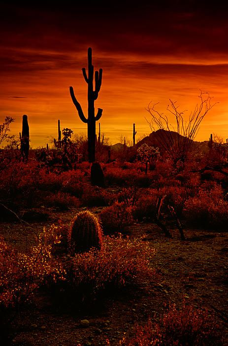 Sonora desert; photo by Saija Lehtonen.  Desert sunsets are the best!!