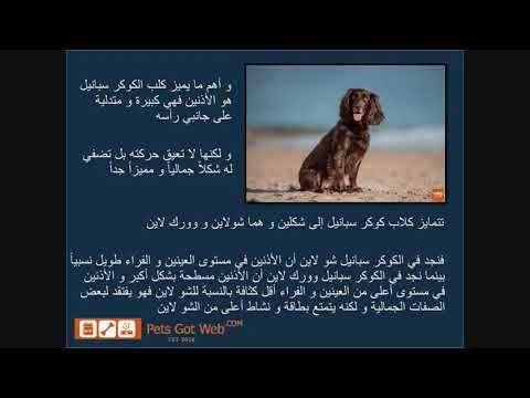 اعرف أكثر عن كلب الكوكر سبانيل Know More About Cocker Spaniel Pandora Screenshot