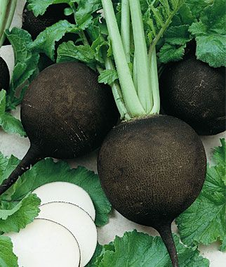 "Radish, Black Spanish Round  A winter variety popular in Europe since the 1500s. Crisp, pungent, spicy white flesh.  Black radishes have been grown and savored in Europe since the 1500s. With handsome black skins, the large 3-4"" turnip-shaped globes have crisp, pungent, spicy pure-white flesh. A winter variety valued for its strong medicinal properties, ease of growth, and long storage.:"