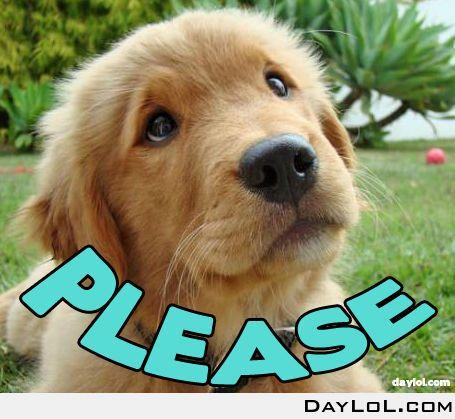 Begging Like A Dog