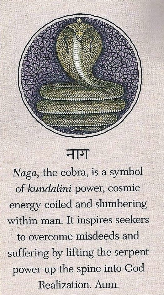 Kundalini illlustration of the serpent. Loved and pinned by www.downdogboutique.com