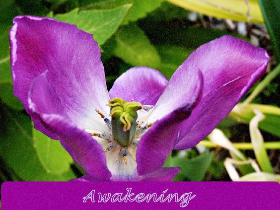 Wild Iris in Alaska envokes inspirtation