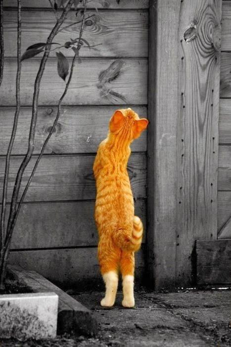 Galeria de fotos para tu blog o webpage: Beautiful orange color photography- Fotos con un toque de color naranja