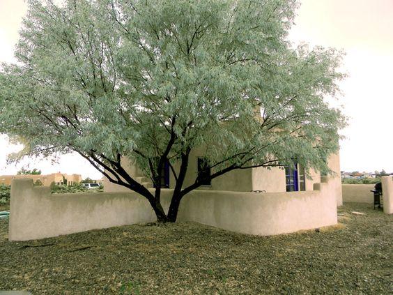 Trees, Olives and Olive tree on Pinterest