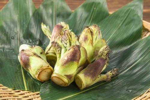 春の山菜といえばコレ タラの芽 の下処理方法やおすすめレシピ コラム オリーブオイルをひとまわし おすすめ レシピ 春 山菜 レシピ