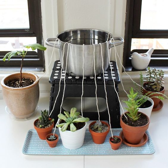 Don 39 t let your houseplants suffer while you 39 re away from home rig up this diy self watering - How do i keep my container home cool ...
