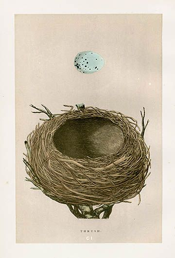 F.O. Morris Nest & Egg Prints 1892
