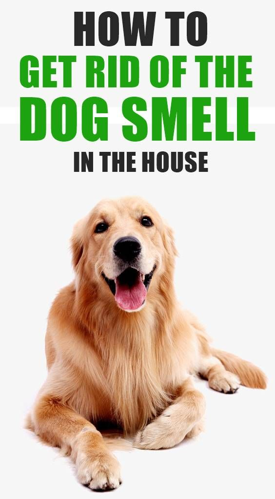 It Can Be Difficult For Dog Owners To Keep Their Homes Smelling