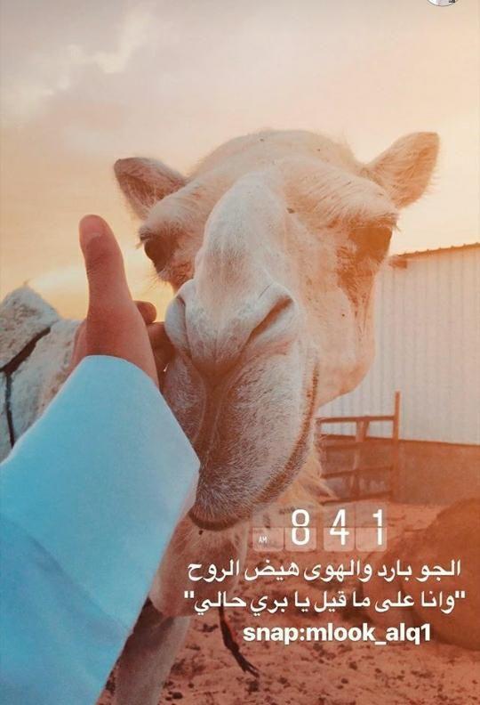 Pin By Aishaattehy On ابيات شعر بدوي Islam Quran Arabic Words Words