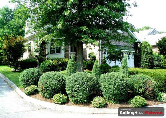 Evergreen trees pinterest evergreen and driveways for Corner lot landscape designs