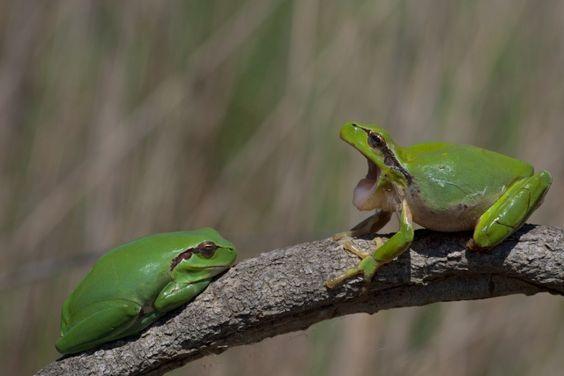 Das Froschpaar To buy this picture please visit www.3aART.de Zum Erwerb dieses Bildes besuchen sie bitte unsere Hompage www.3aART.de