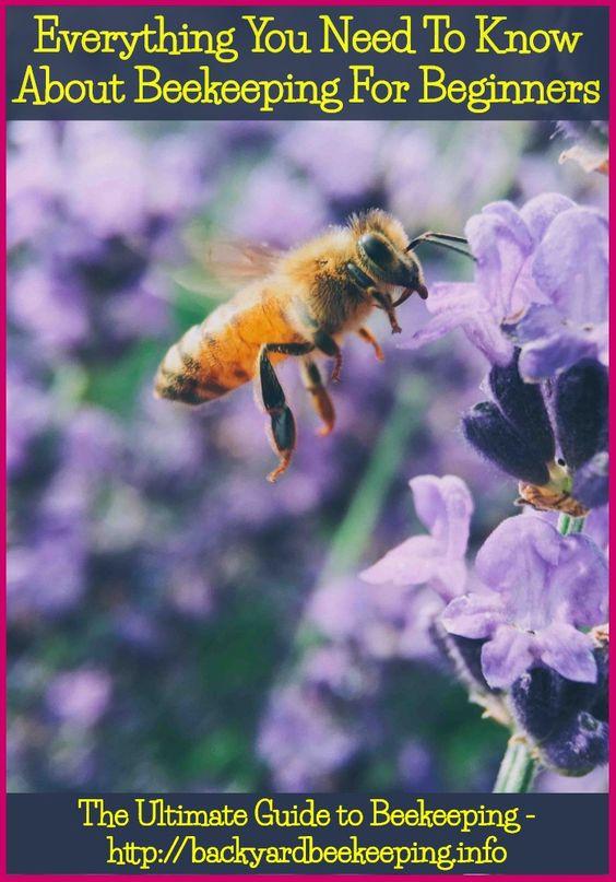 Keepingbeesbrisbane Bee Keeping Bee Backyard Beekeeping