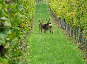 Straußwirtschaft - Weingut Gilda Moll