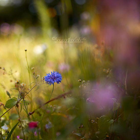 Hidden Treasures. by OliviaMichalski