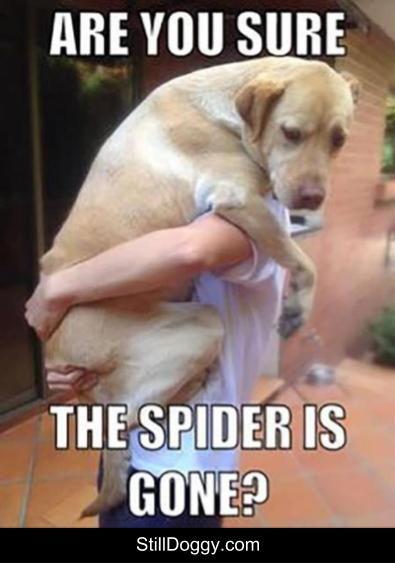 I Am Arachnophobic Too Dog Memes Dog Memes Hilarious Dog Memes Funny Dog Memes Humor Doggo Meme Do Dog Jokes Funny Dog Memes Funny Animal Pictures