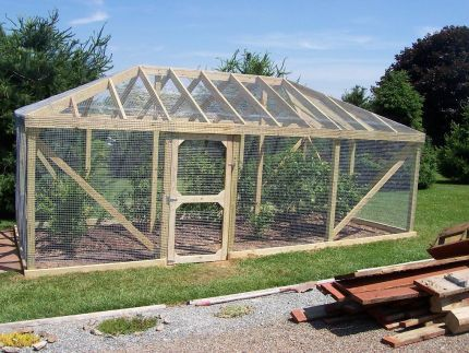 Blueberry Cage To Keep The Birds Out Fine Homebuilding Gardening Pinterest The Birds
