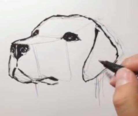 Aprende Como Dibujar Un Perro Anime Paso A Paso 7 Como Dibujar Un Perro Perros Para Dibujar Faciles Perros Dibujos A Lapiz