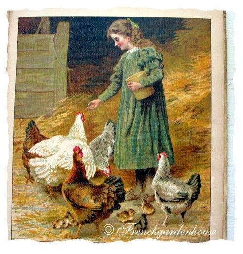 Girl feeding chickens: