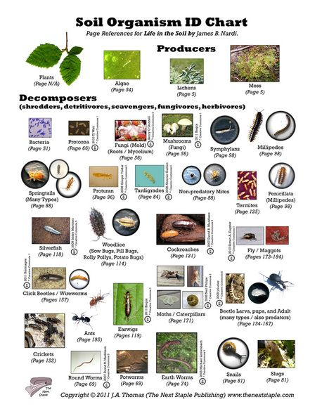 Soil organism id chart homeschool identification for Things in soil