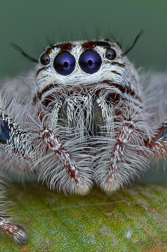 Jumping Spider by Simon Shim on 500px