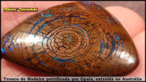 Opalized fossil