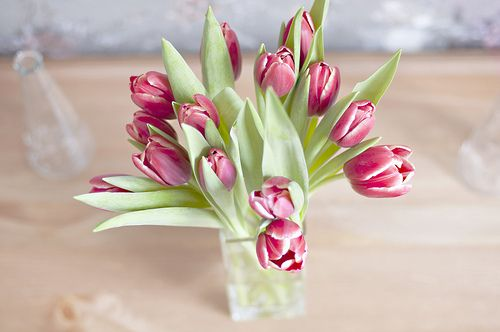 tulips: Favorite Flowers, Flower Beauties, Tulips I Ve, Floral Arranging, Flower Arrangements, Pretty Flowers, Flower Power