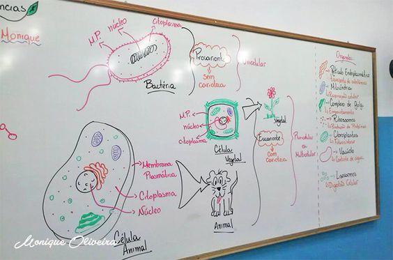 professora-desenha-no-quadro2