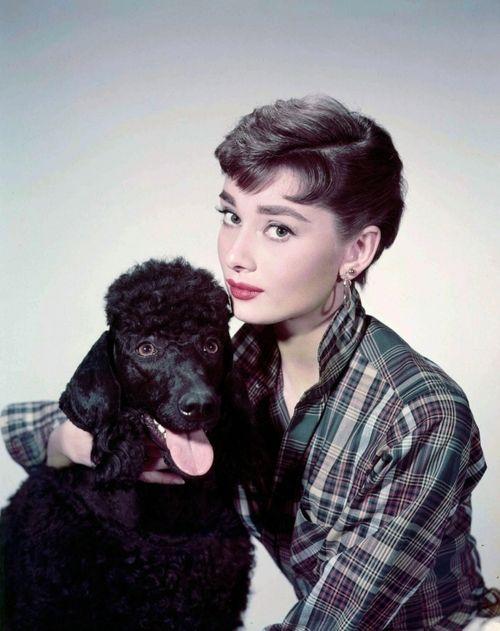 Promotional still for Sabrina - 1954