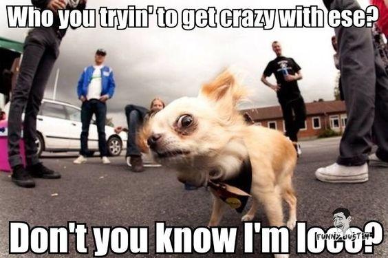 Hahaha, OMG look at this Ese