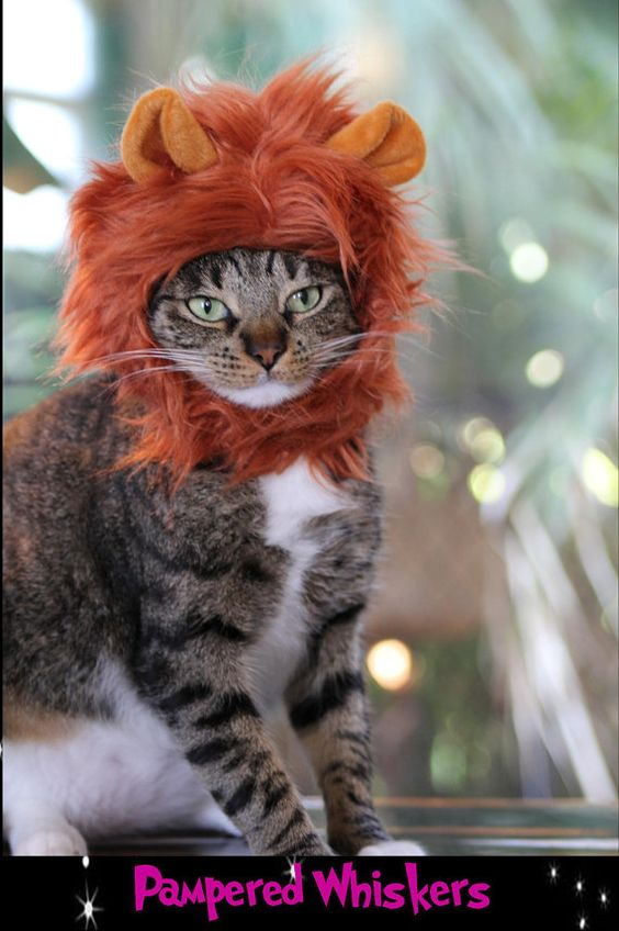 Lion Costume Hat for Cats and Dogs by PamperedWhiskers on Etsy